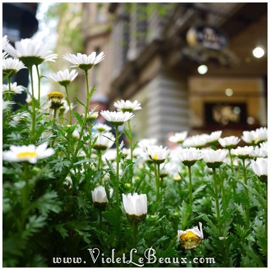 Flowers and Foods – Melbourne Snapshots