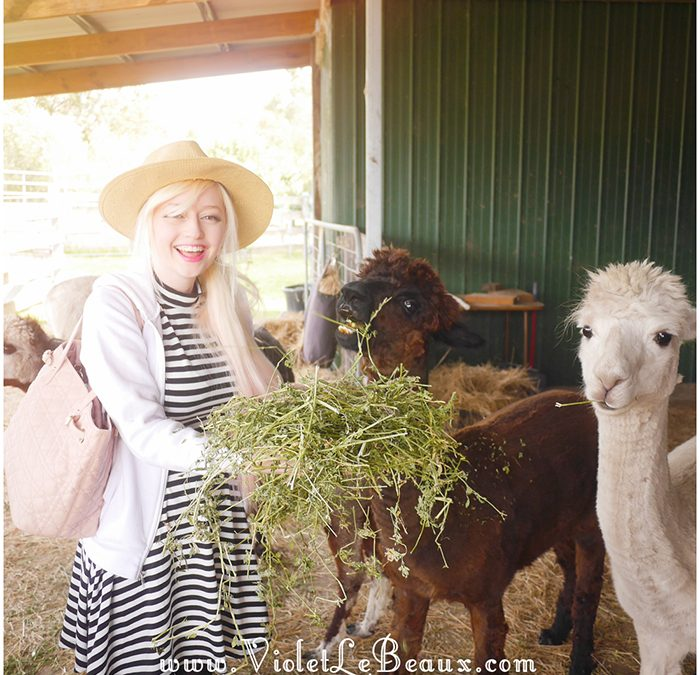 Alpaca Farm Hunt!