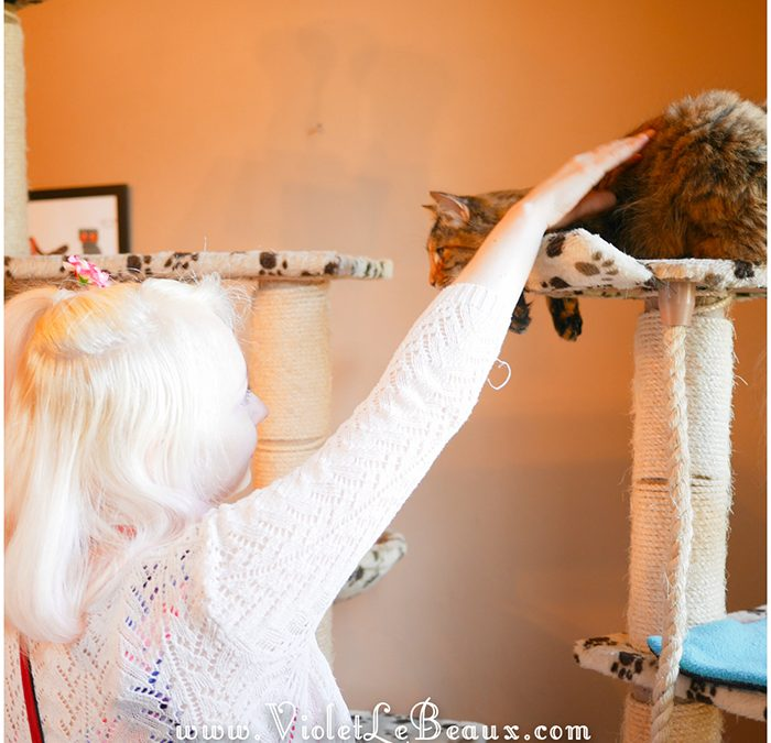 A Visit To The Cat Cafe