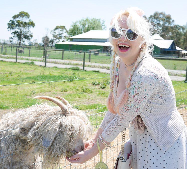 Warook Animal Farm Day